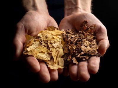 Используемый нами табачный лист